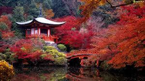 Resultado de imagem para kioto