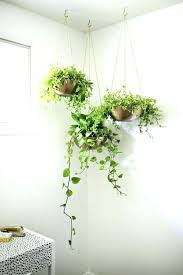 wall plant pots indoor wall plant pots three wall indoor plants with hanging ivy over the wall plant