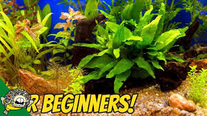 Low Light Cold Water Aquarium Plants My Top 10 Easy Beginner Aquarium Plants