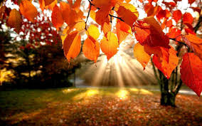 Fall Images Free Fall Wallpapers Free Wallpaper Cave