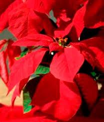 seasonal plants .