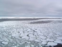 Image result for images of arctic sea ice