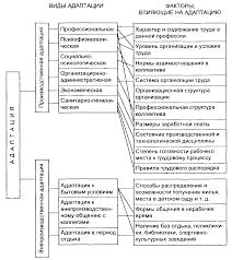 Совершенствование системы адаптации персонала на предприятии 1 1 Понятие адаптации персонала и ее роль в кадровой политике