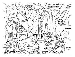 Small Picture Rainforest Animals Pictures To Print Coloring Coloring Pages
