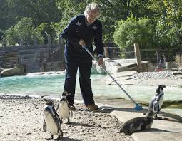 zookeeper cleaning. Modren Zookeeper Man By A Pool Throughout Zookeeper Cleaning R