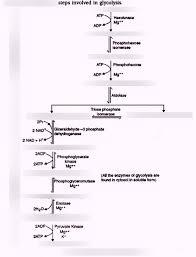 Aerobic Respiration Flow Chart Quiz Diagram Quizlet