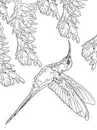 Small Picture Hummingbird coloring pages Download and print Hummingbird