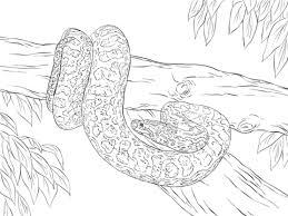 Anaconda Kleurplaten Gratis Printbare Kleurplaten