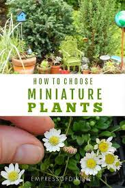 2 pots terrarium fairy garden plants