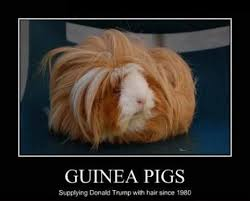 Guinea Pigs Meme | Slapcaption.com | Piggly Wiggly ❤ | Pinterest ... via Relatably.com