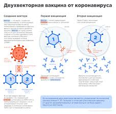 О вакцине | Официальный сайт вакцины против COVID-19 Sputnik V.