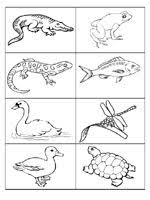 Small Picture Pond Life Coloring Page Pond life Worksheets and Kindergarten