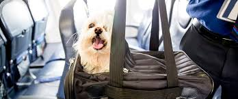 alaska airlines pet travel policy