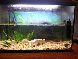 Turtle Tank Decor Thinkin About Getting A Turtle Anyone Have One 13k Reps