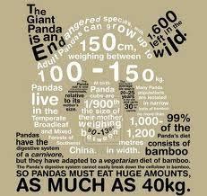 Giant Panda Population Chart Endangered Species Giant Panda Rm 1012