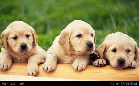 Puppies dogs live wallpaper for Android ...