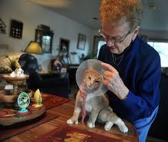 Amy Calder: Tending to a hurt kitten - CentralMaine.com
