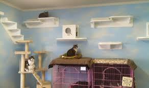 Corner Cat Shelves Cat Wall Climbing Systems Wall Shelves Design Wall Shelving For 46