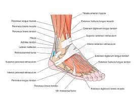 Pezen voet