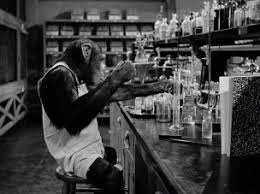 Image result for monkey business 1952 chimpanzee