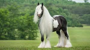 most beautiful horse breed in the world. The 10 Most Beautiful Horse Breeds In World And Breed Love Nature