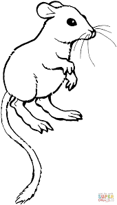 Small Picture Kangaroo Rat coloring page Free Printable Coloring Pages