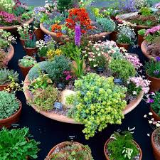 container gardening. Plant Alpines And Sempervivums In Shallow Containers Container Gardening