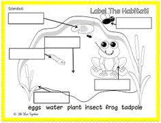 Frog Cycle Activities   Use this activity to help the children together with Frog Dissection   tutorial and worksheet    diagrams to help moreover Science Kindergarten Worksheets And Printables   Educational Games in addition Frog Life Cycle – Extras   Frog eggs  Frog activities and Frogs as well Free Printable Life Cycle Frog   Social Studies and Science in addition Frog and Toad Venn Diagram Useful preschool worksheets for also Grow and Change timelines for Kindergarten and First Grade likewise 442 best April images on Pinterest   School  Spring and additionally  further Frog Preschool Printables as well . on frog labeling worksheet kindergarten
