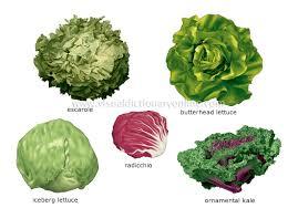 Food Kitchen Food Vegetables Leaf Vegetables 2 Image