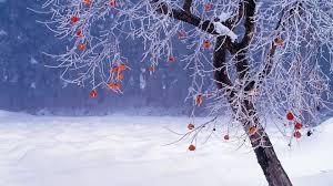 Winter Hd Backgrounds Japan Winter Tree Download