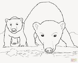 Cute Baby Sea Animal Coloring Pages Printable Educations For Kids