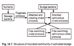 essay on environmental biotechnology essay 4 microbes and plants in environmental remediation