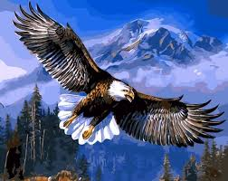eagle painting by numbers 40 50 cm hand painted frameless picture cuadros decoracion wall