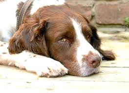 natural heartworm treatment. Natural Heartworm Treatment For Dogs Cat A Prevention Dog Treating In Naturally Remedies