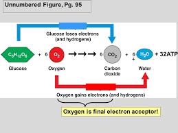 cellular respiration equation photosynthesis
