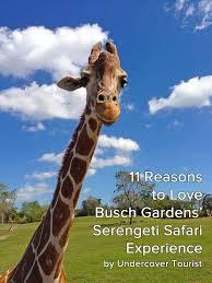 busch gardens serengeti safari experience