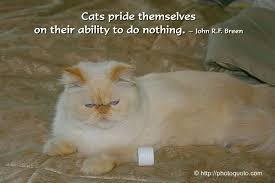 Cat Quotes Impressive Famous Quotes About Cats On QuotesTopics