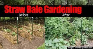 straw bale gardening 10 easy growing