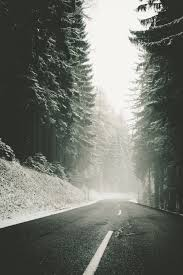 snow forest trees road fog