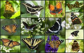 Image result for butterfly collage