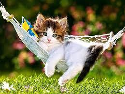 Cute Kitten Desktop Wallpapers on ...