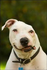 oogy s story animals abused abandoned inc  when our dog oogy was about ten weeks old and weighed 20 pounds he was tied to a stake and used as bait for a pit bull