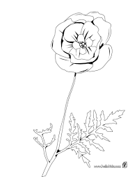 Beautiful Poppy Coloring Page For Kids