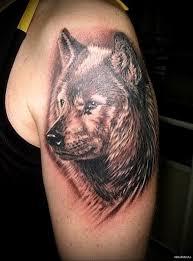 тату морда волка мужская татуировка на плече Tatufotocom