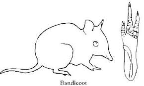 Small Picture BANDICOOT