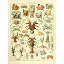 Crab Species Chart Amazon Com Meishe Art Vintage Poster Print Crustacea