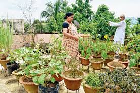 Small Picture Vegetable Gardening In India Container Gardening Ideas