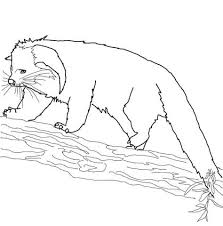 binturong animal coloring pages