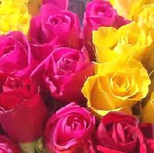 American Rose Size Chart Rose Flower Varieties And Types Of Roses Theflowerexpert