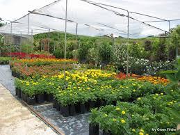 garden nurseries near me. Landscape Nursery Near Me Best Of My Green Finder Plant Vendors Pauline Garden Nurseries
